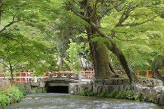 DSC05751上賀茂神社.jpg