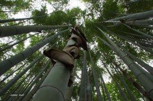 DSC06732圓光寺の竹.jpg