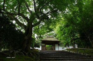 DSC06909安楽寺の山門.jpg